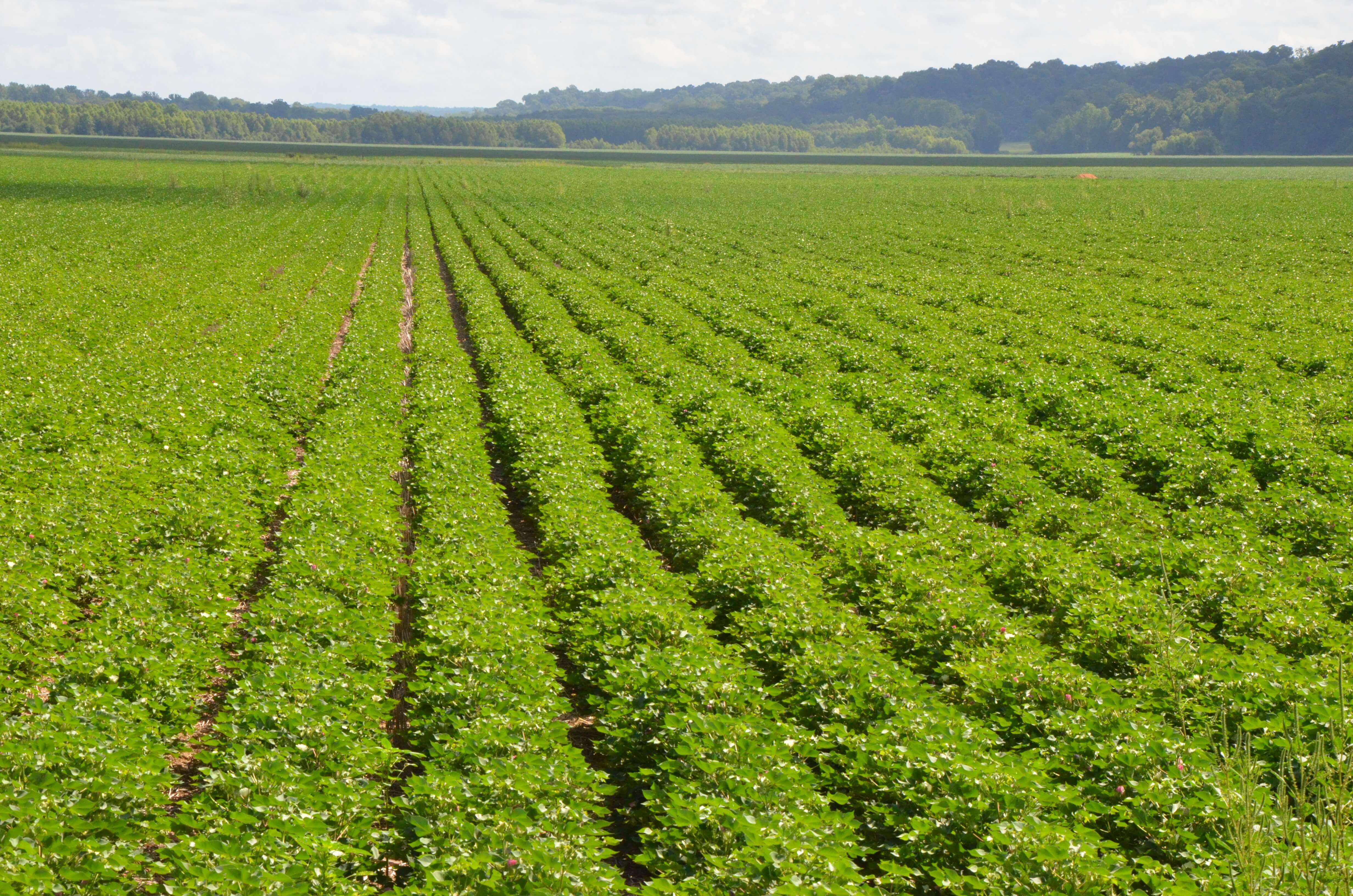 Farm Bureau seeking changes in South Mississippi crop insurance dates