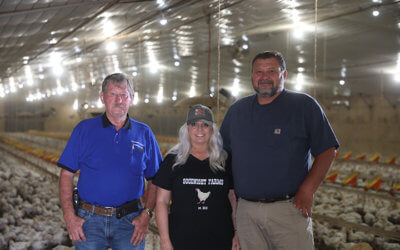 New technology removes guesswork from chicken farming
