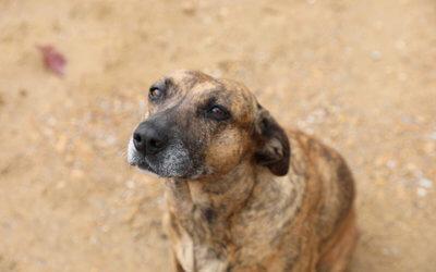 Mississippi Farm Bureau Federation 2020 Farm Dog of the Year: Bugg Mills