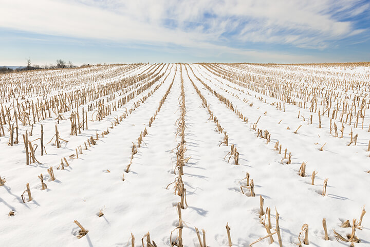 MFBF hosting virtual Winter Commodity Conference