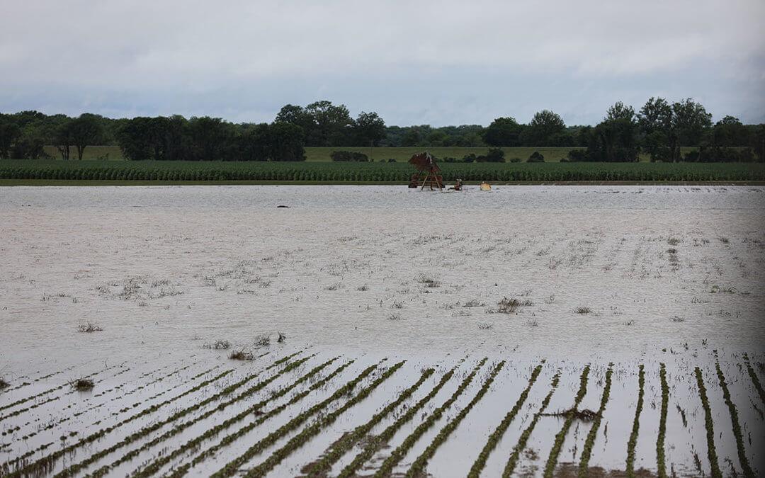 Devastating Rainfall Damages North Mississippi Crops