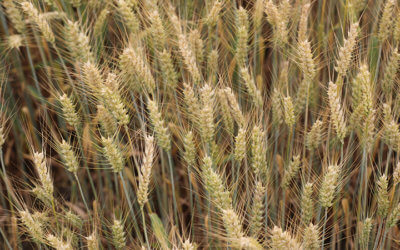 MFBF Hosting Summer Commodity Conference in July